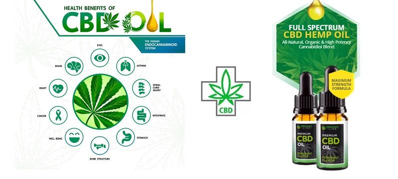 Essayez Line Organic CBD qui contient des ingrédients 100% naturels!